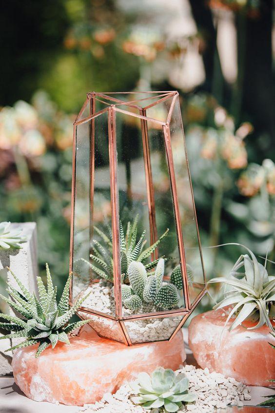 cactus en terrario