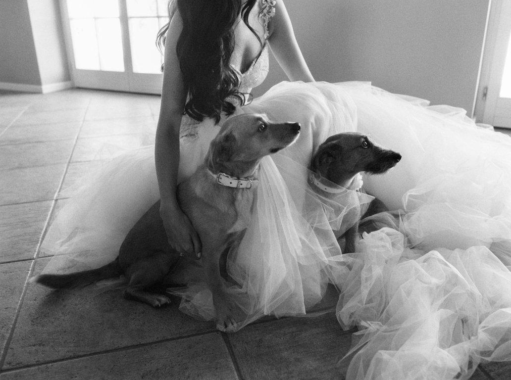 mascota en tu boda