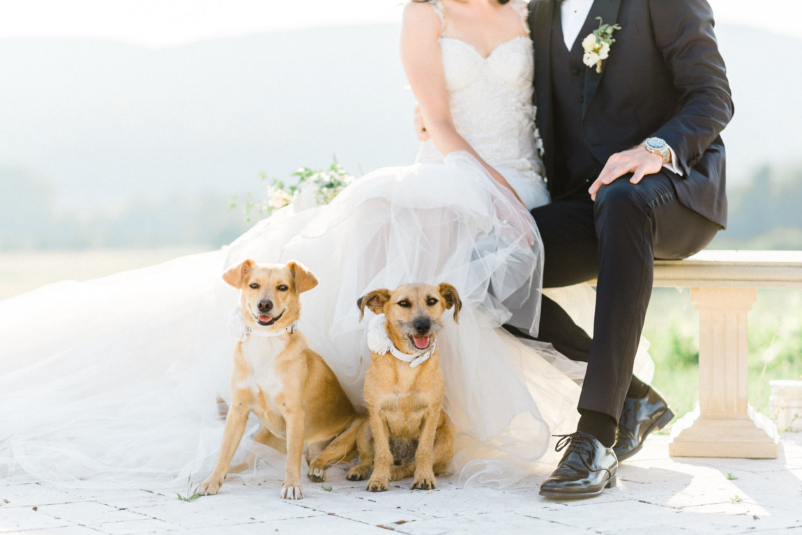 perros anillos boda