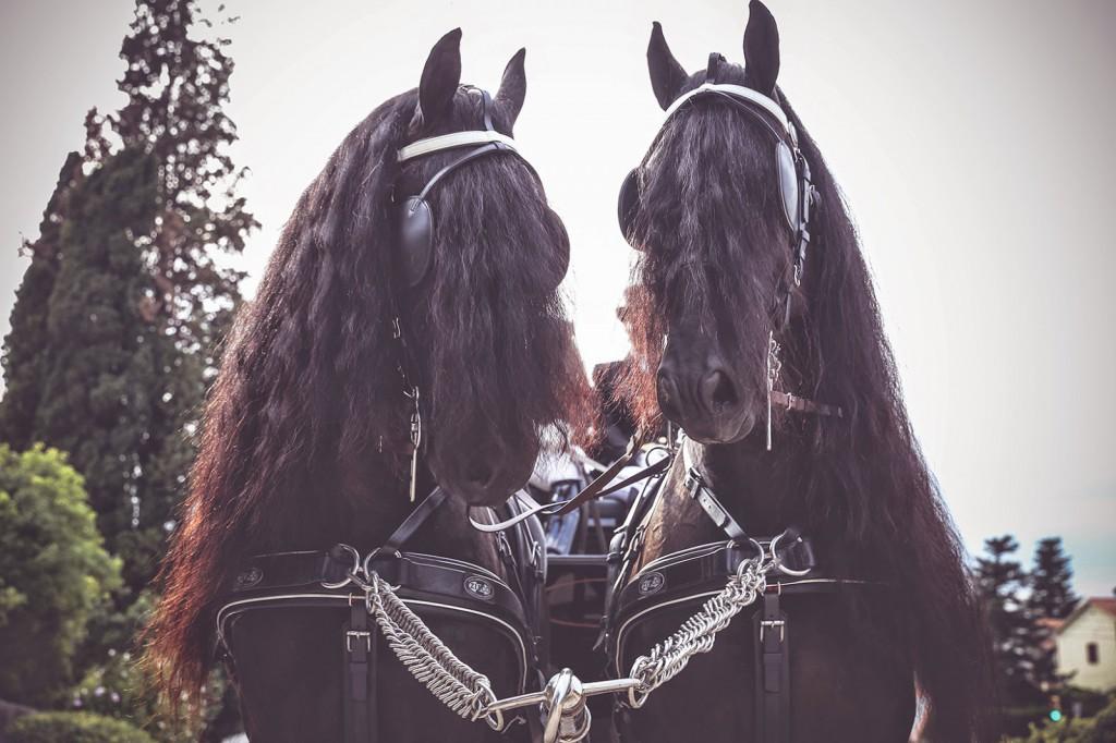 coche caballos boda