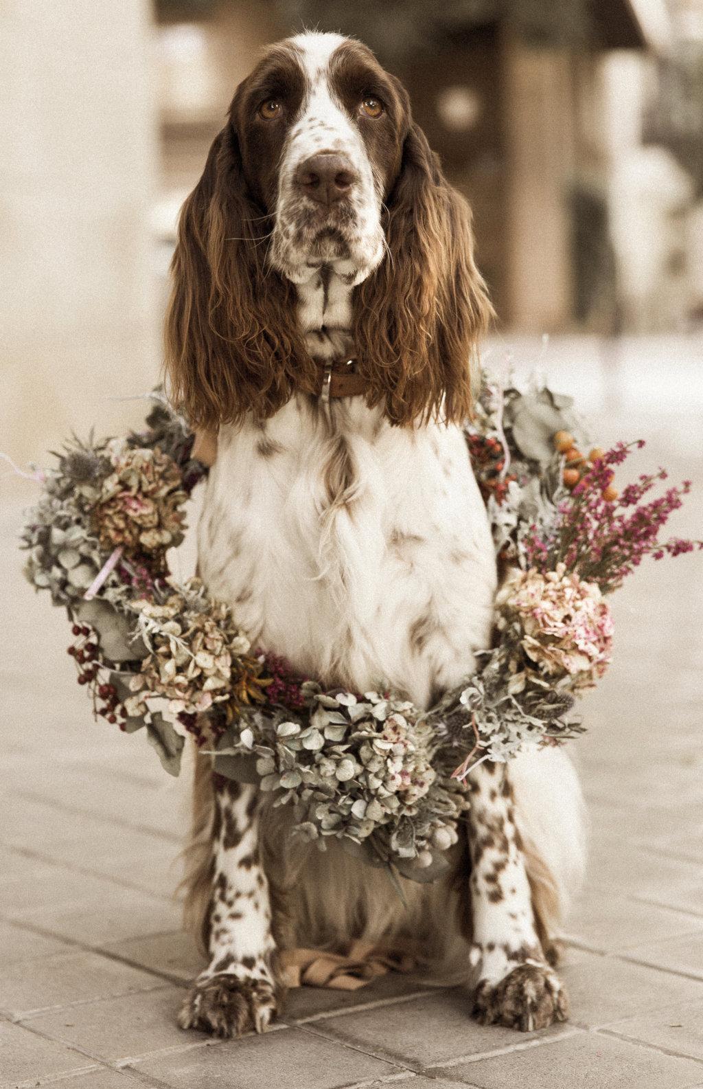mascota perro boda