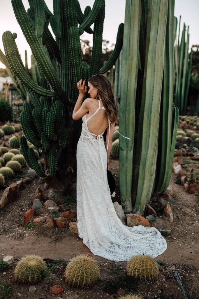cactus preboda